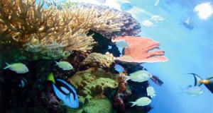 ROUND-Reef