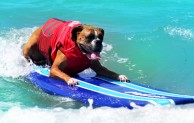 "Dogs set to ""make waves"" at 9th Annual Surf Dog Surf-A-Thon"