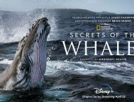 SECRETS OF THE WHALES Comes to Disney+